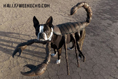 echo-scorpion-dog-costume.jpg